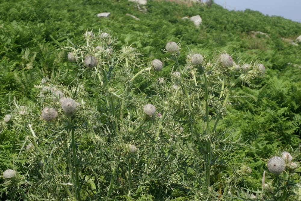 http://api.tela-botanica.org/img:000059726O.jpg