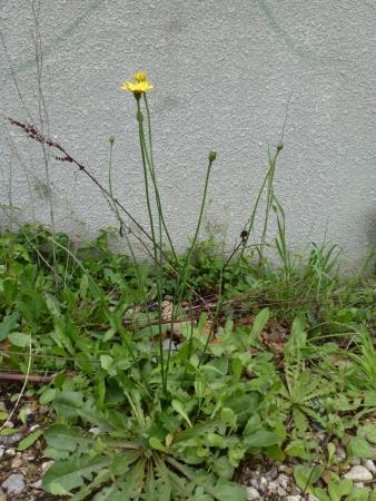 http://www.tela-botanica.org/appli:cel-img:000071681O.jpg