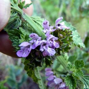 une fleur - blucat- 8 août trouvée par martine - Page 2 Img:000148251CRS