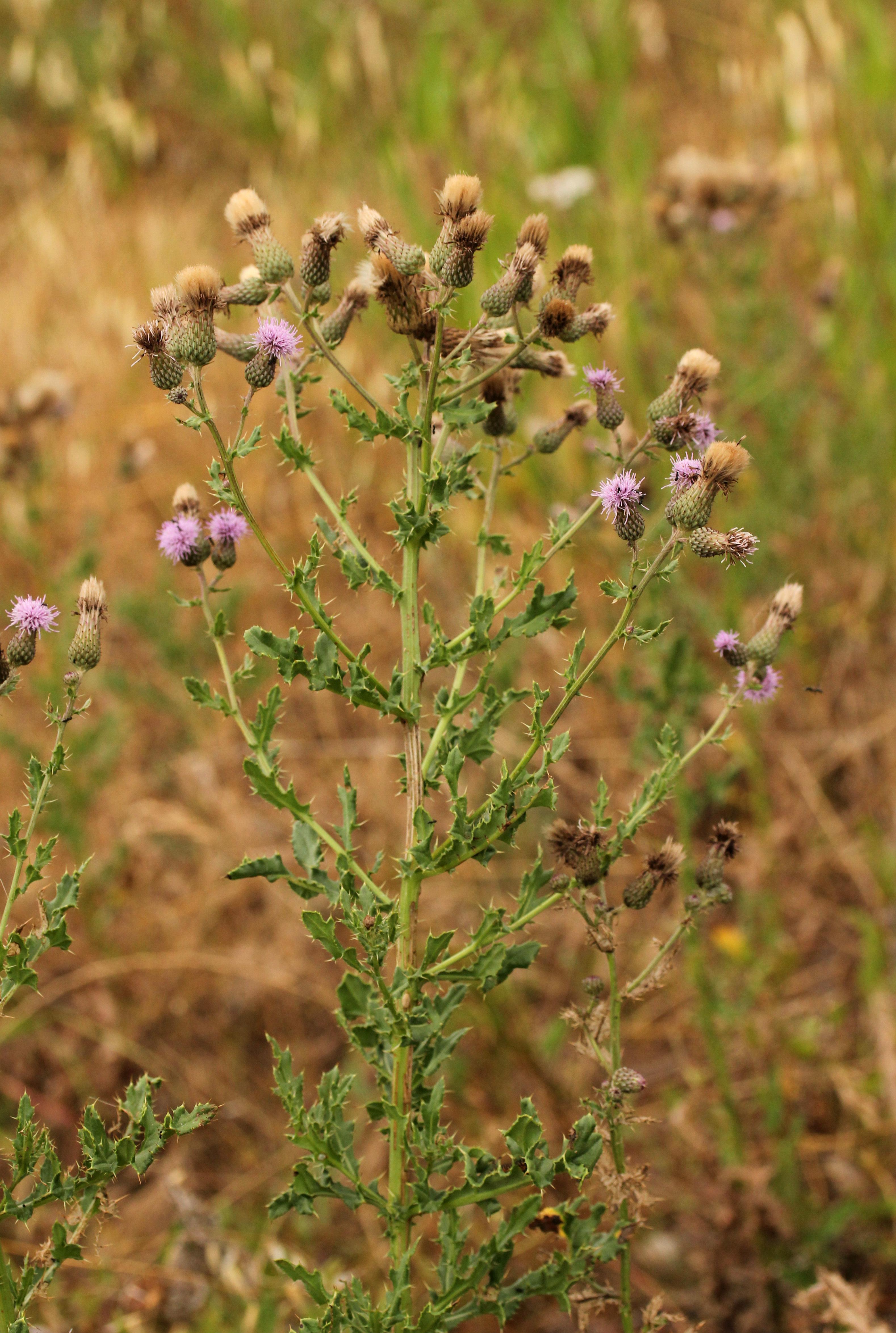 http://api.tela-botanica.org/img:000148434O.jpg