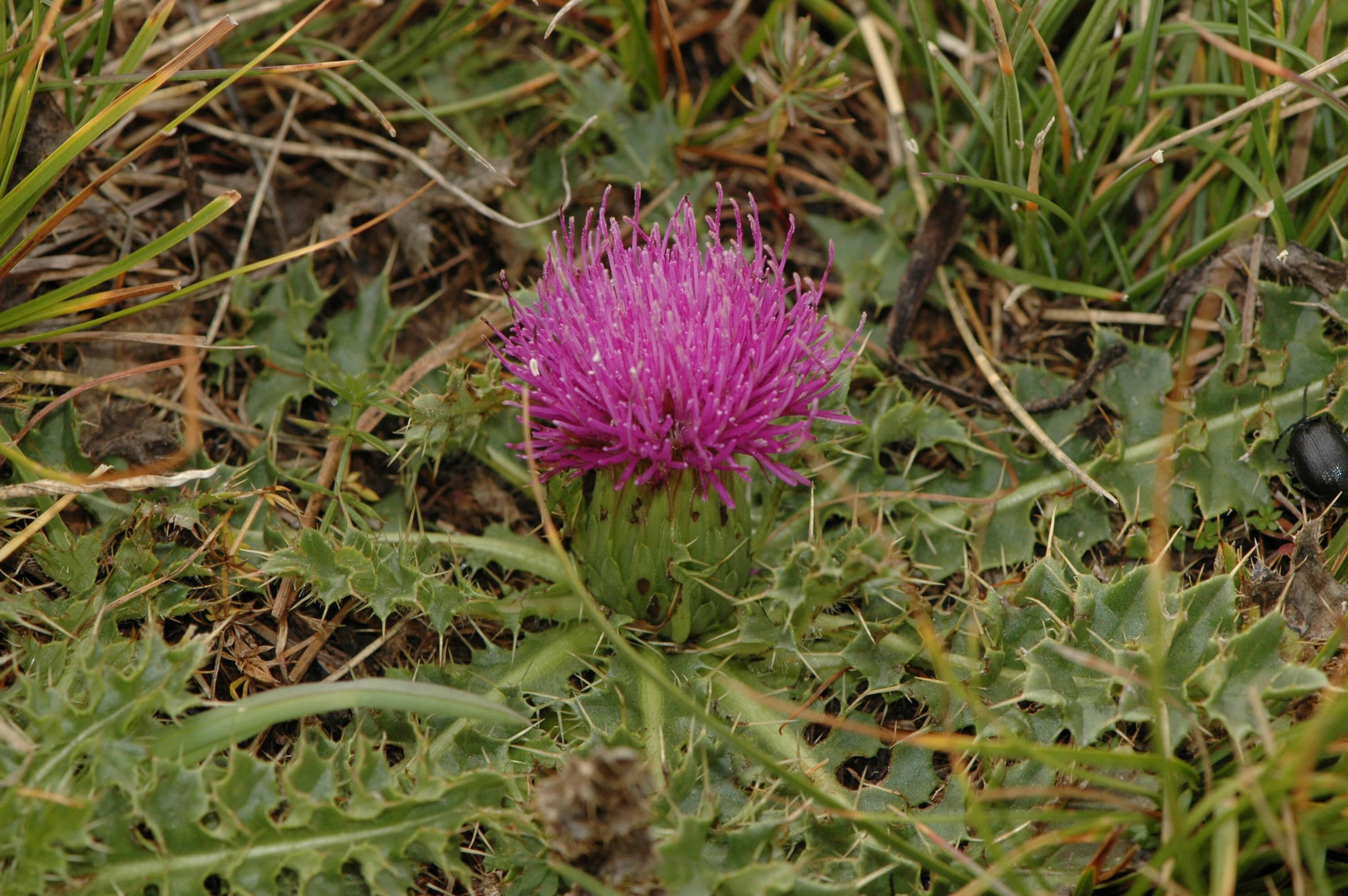 http://api.tela-botanica.org/img:000220356O.jpg