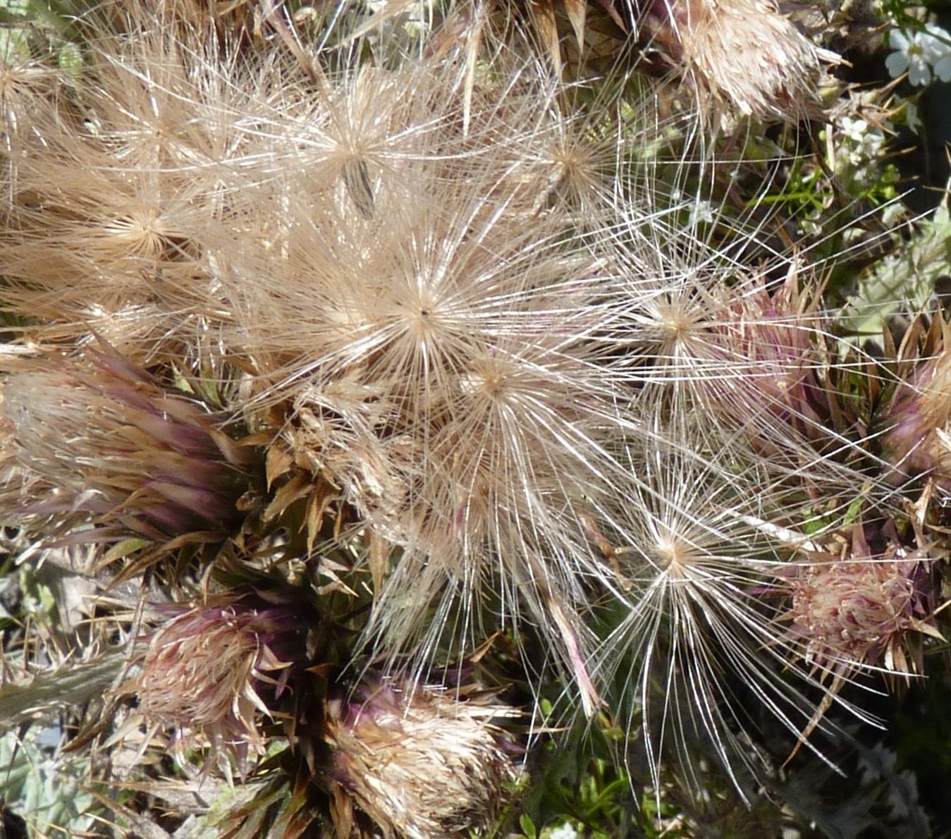 http://api.tela-botanica.org/img:000255171O.jpg