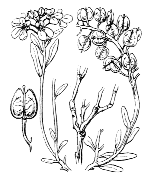 Illustration de Coste
