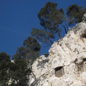 Photographie n°26927 du taxon Pinus halepensis Mill.