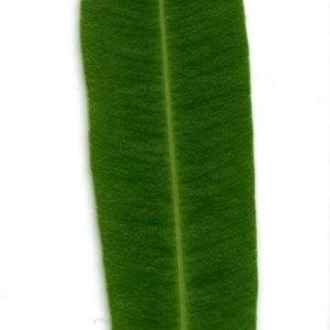 Photographie n°30949 du taxon Nerium oleander L. [1753]