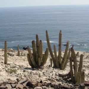 Photographie n°46833 du taxon Cactaceae