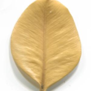 Photographie n°48310 du taxon Buxus sempervirens L.