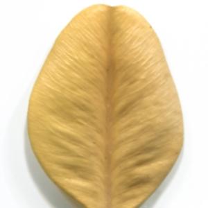 Photographie n°48313 du taxon Buxus sempervirens L.