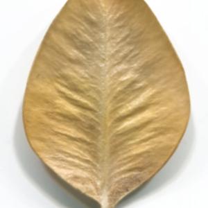 Photographie n°48326 du taxon Buxus sempervirens L. [1753]