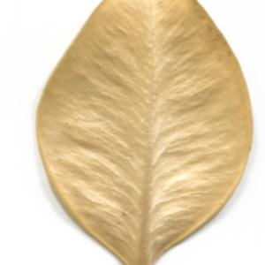 Photographie n°48331 du taxon Buxus sempervirens L. [1753]