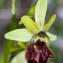 Jean-Jacques Houdré - Ophrys aranifera Huds. [1778]
