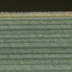Photographie n°63718 du taxon Cladium mariscus (L.) Pohl