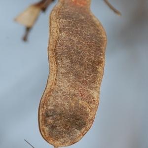 Photographie n°65941 du taxon Robinia pseudoacacia L.