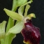 Bertrand BUI - Ophrys litigiosa E.G.Camus [1896]