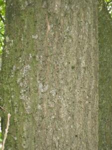 GOËAU Hervé, le 30 avril 2012 (Vincennes (Arboretum de l'Ecole du Breuil))