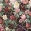 Genevieve Botti - Trifolium campestre Schreb. [1804]