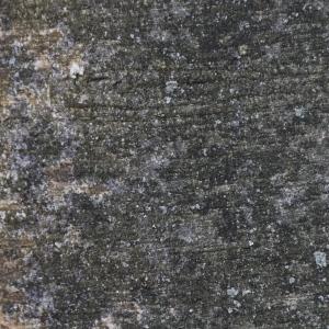 Photographie n°94791 du taxon Fagus sylvatica L.