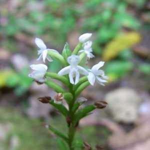 Photographie n°95503 du taxon Orchidaceae