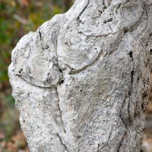Photographie n°96701 du taxon Quercus suber L. [1753]