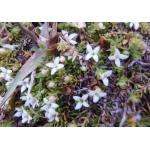 Loganiaceae R. Brown ex C.F. Martius