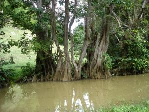Roubaudi Liliane, le 11 décembre 2007 (Guadeloupe (Morne à l'eau))