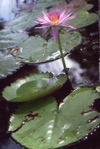 Liliane Roubaudi, le  8 janvier 2001 (La Réunion (Jardin d'Etat))