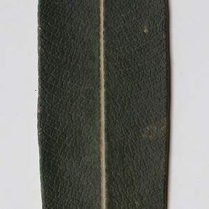 Photographie n°106286 du taxon Nerium oleander L. [1753]