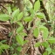 Mathieu Sinet - Carpinus betulus