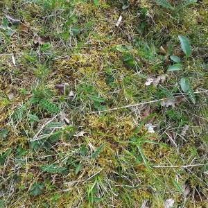 Photographie n°114887 du taxon Cirsium defloratum (L.) Scop. [1772]