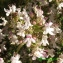Bernard Andrieu - Thymus vulgaris L.