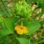 Bertrand BUI - Euphorbia spinosa L. [1753]