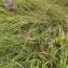 Florent Beck - Centaurea L.