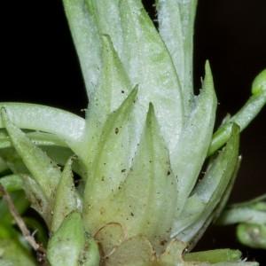 Photographie n°186869 du taxon Viola hirta