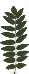 Benezet Ruddy, le  1 août 2010 (France)