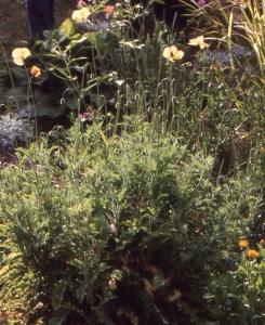 Liliane Roubaudi, le 14 septembre 1996 (Le Puy)