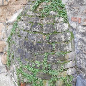 Photographie n°209778 du taxon Cymbalaire des murailles
