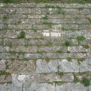 Photographie n°213761 du taxon Erodium cicutarium subsp. cicutarium