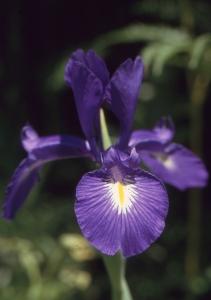 Roubaudi Liliane, le  4 juillet 1999 (Urdos)