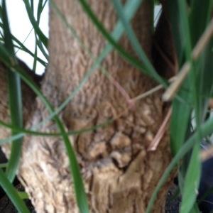 Photographie n°214632 du taxon Aconitum lycoctonum L. [1753]