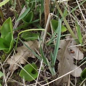 Photographie n°218759 du taxon Orchidaceae