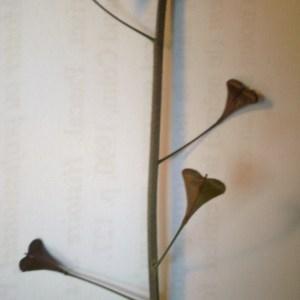 Photographie n°228745 du taxon Capsella rubella Reut. [1854]