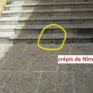 Photographie n°234913 du taxon Crépis de Nîmes