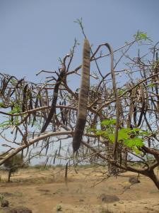 Sénégal ENGOUEMENT, le 15 mai 2014 (Toubab Dialaw)