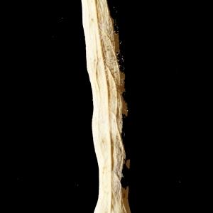 Photographie n°245599 du taxon Brassica napus var. oleifera (Moench) Delile