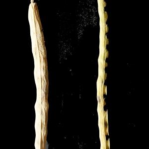 Photographie n°245600 du taxon Brassica napus var. oleifera (Moench) Delile
