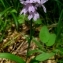 YANNICK DURAND - Dactylorhiza fuchsii (Druce) Soó