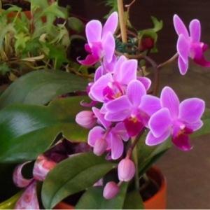 Photographie n°252667 du taxon Orchidaceae