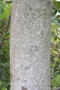 GOËAU Hervé, le  4 août 2014 (Denia (Parque natural del Macizo del Montgó))