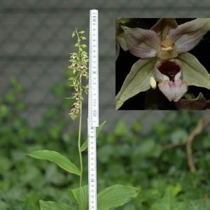 Photographie n°277159 du taxon Orchidaceae
