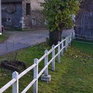 Photographie n°278552 du taxon Mûrier blanc